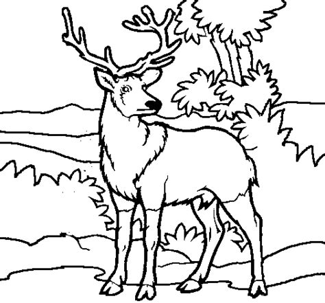 deer adult coloring zentangle page coloring pages
