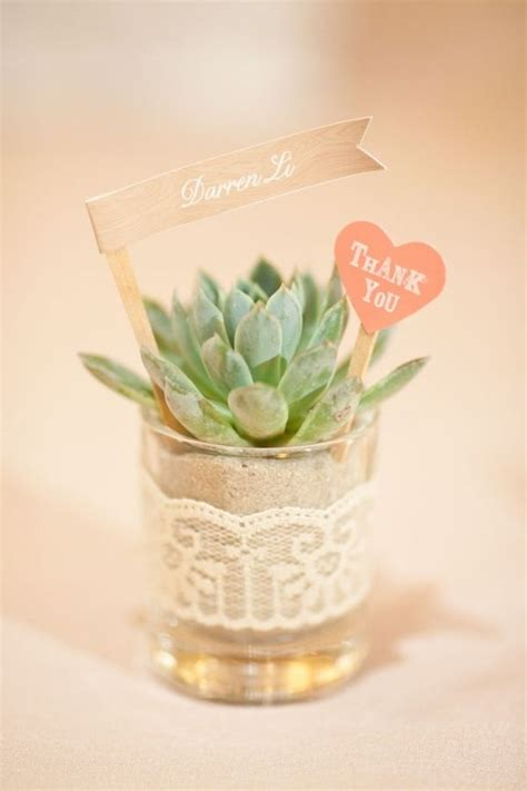 cute succulents succulent wedding favors tema vetplant succulent
