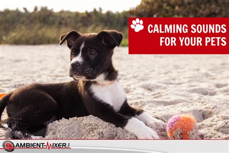 calming sounds for dogs soothing calming sounds for pets the ambient mixer