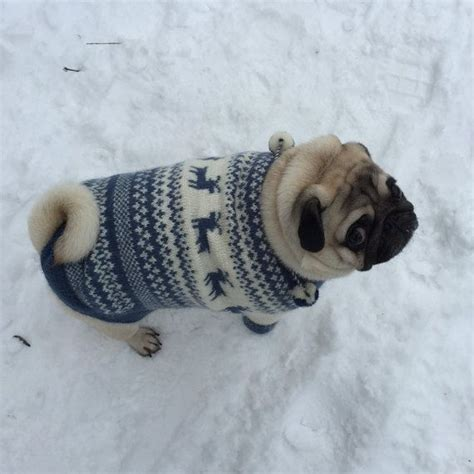 Hoodie The Doc 46 Fy51 sweater knit sweater sweater for pug clothing for