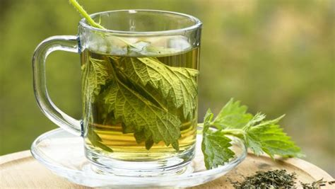 Nettle Tea For Detox by 8 Health Benefits Of Nettle Tea Flush Out Toxins With