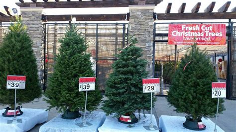 walmart fresh cut christmas trees rosemead walmart supercenter walmart