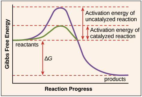 activation energy diagram activation energy graph www pixshark images