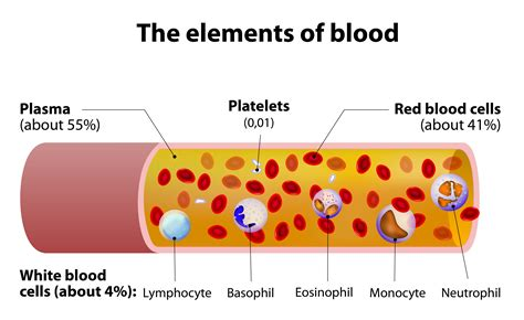 blood diagram whole blood basics how to maintain a stable sle