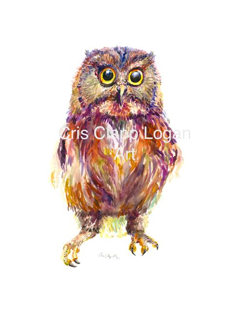 colorful baby colorful baby owl