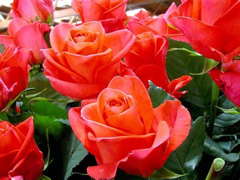 i fiori di sanremo i fiori di sanremo sul palco dell ariston bonvivre