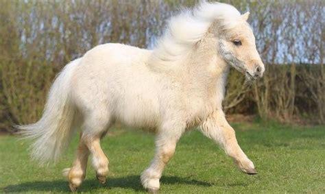 manso mais cara do mundo 2015 top 10 ra 231 as de cavalos mais caras do mundo