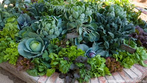 Food Garden by How To Design A Food Garden Completehome