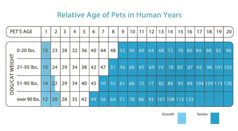 what age is a puppy kinslow veterinary clinic wilson county tennessee 187 pet age chart