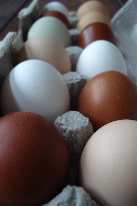 eggs at room temperature eggs left at room temp real food tastes
