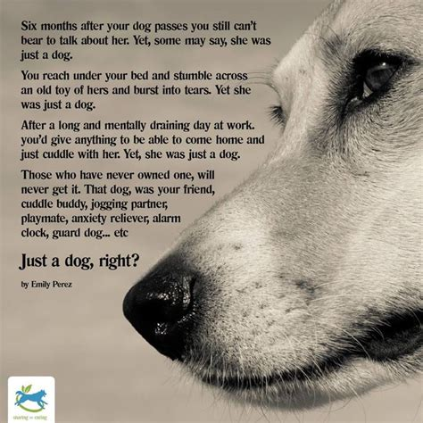 has anyone died in my house free 17 best images about dog heaven and pet loss on pinterest rainbow bridge pets and my heart