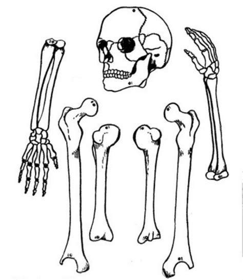 imagenes de calaveras y esqueletos para colorear pinto dibujos calaveras para colorear dia de los