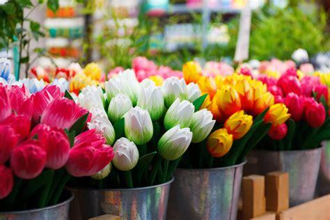 come piantare i tulipani in vaso come coltivare i tulipani in vaso consigli e regole d oro