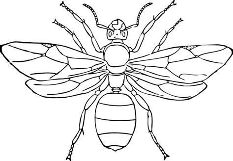 insects coloring page insect coloring pages 2 coloring pages to print