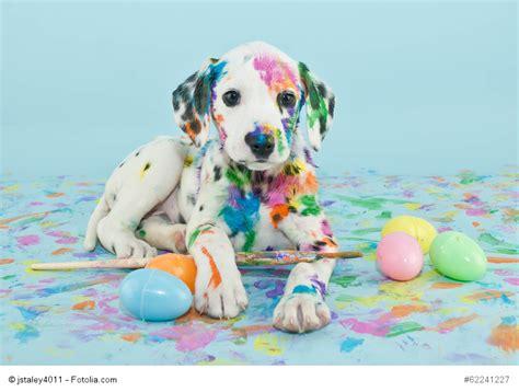puppy paint fotolia fr 187 une image une histoire un chien cabot