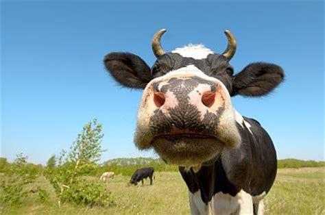 matratze öko kul uppsats om en ko allas se