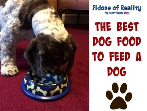 best food to feed a puppy the best food to feed a fidose of reality