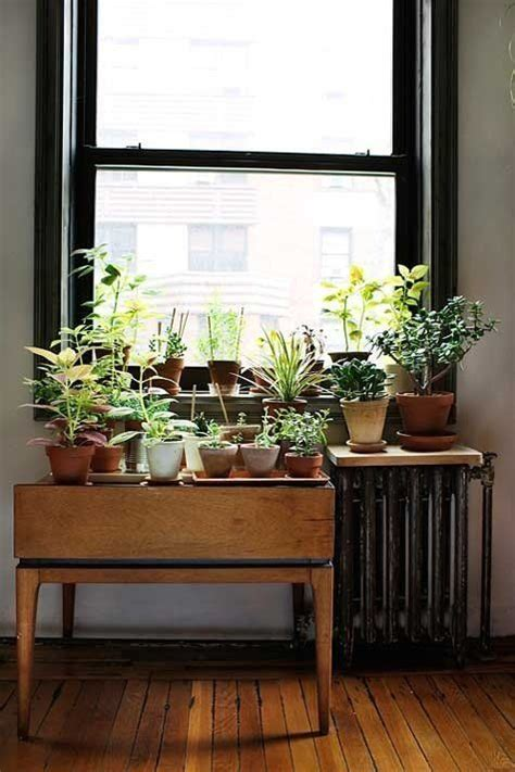 Window Sill Garden Inspiration 17 Best Ideas About Indoor Window Garden On Herb Garden Indoor Indoor Herbs And