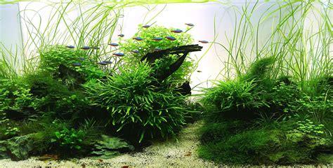 Planters Sylvania Ga by 170 I Helyezett Kangaroo Creek Akv 225 Rium M 233 Rete 90 X