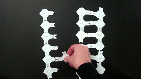 How To Make A Dna Model With Paper - dna replication lab using paper models 2