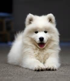 Cute animals dogs puppy