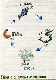 la catena alimentare spiegata ai bambini attivit 224 5 fiume1