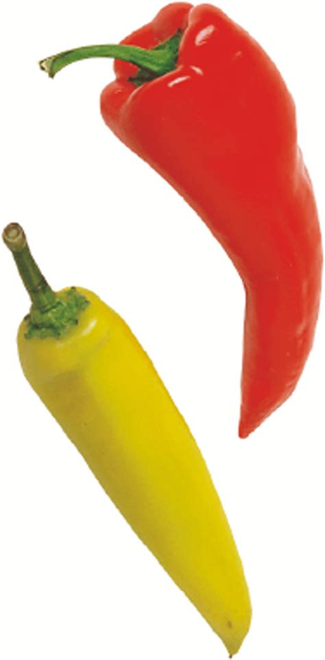 chili peppers the gallery for gt types of chili peppers chart