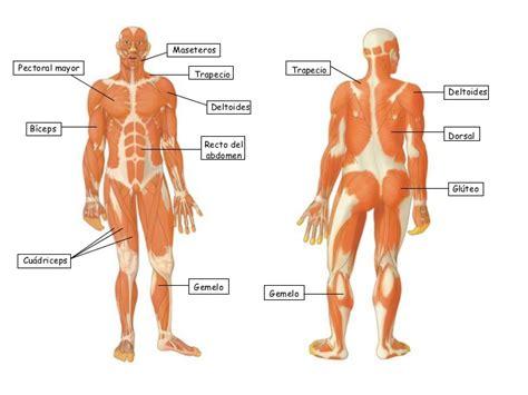 el cuerpo humano 848016977x el cuerpo humano