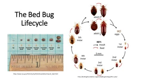 do bed bugs only come out at night bed bugs how to protect your library from infestation