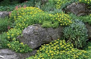trade your lawn for a ground cover toledo blade