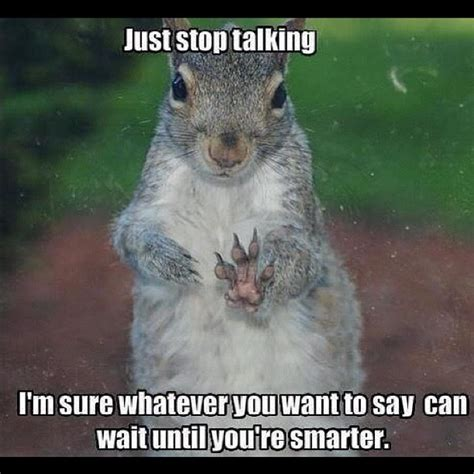 Funny Squirrel Memes - funny squirrel memes