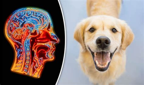 do dogs memories memory canine pets remember complex actions of other nature news