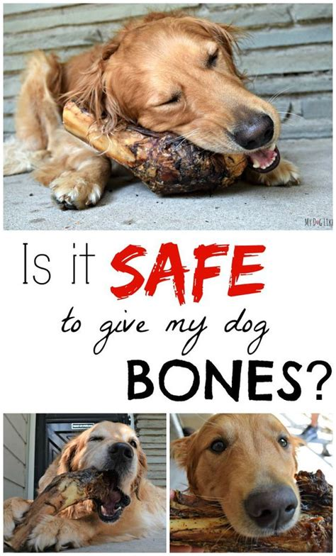 safe bones for puppies for dogs bone jewelry and on