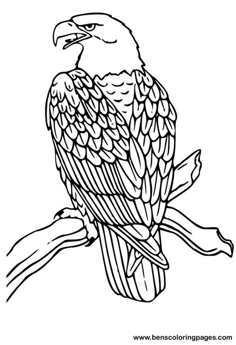 bald eagle color sheet free coloring pages of bald eagle drawing