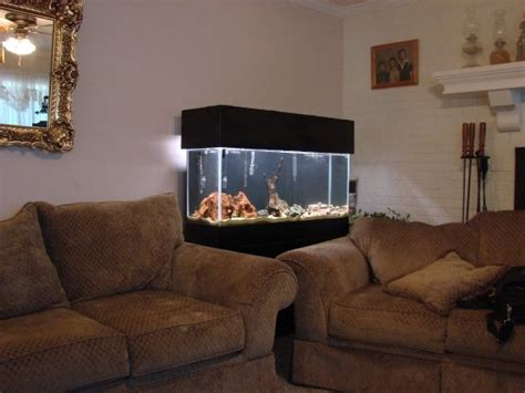 fish tank living room cichlids 55 gallon living room aquarium