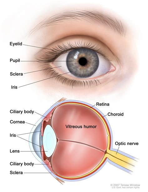 outer eye diagram health problem solutions structure of the eye