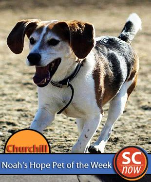 pet of the week churchill sioux city now