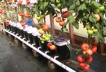 Jual Pupuk Hidroponik Cabe Di Surabaya alat hidroponik informasi alat alat hidroponik menjual