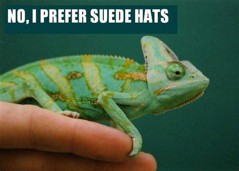 Reptile Memes - more reptile memes nerds and cake