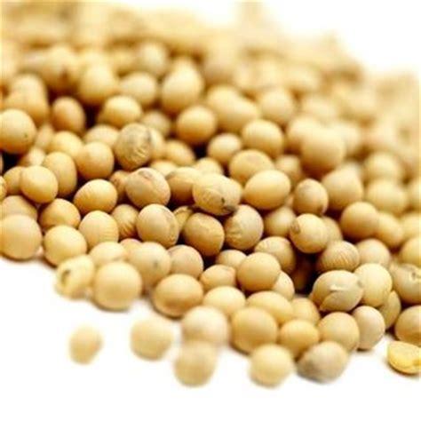 Kacang Kedelai 2 makanan hamster dunia hammie