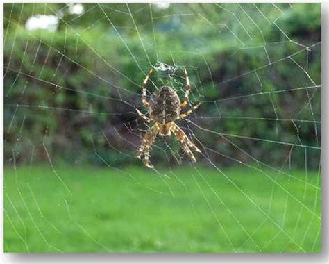 Garden Spider Colorado Garden Spider