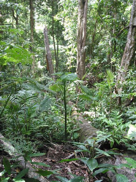 images gt plants
