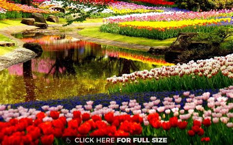 Images Of Flowers In The Garden Beautiful Flower Garden Hd Wallpaper