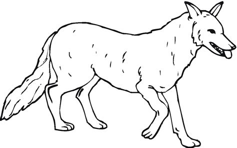 Baby Wolf Pup Coloring Pages Baby Wolf Coloring Pages