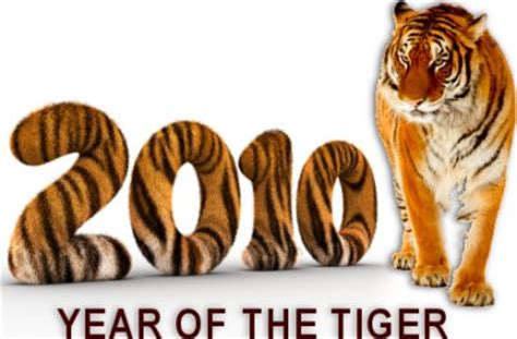 new year 2017 tiger year if the tiger best tiger image and photo hd 2017