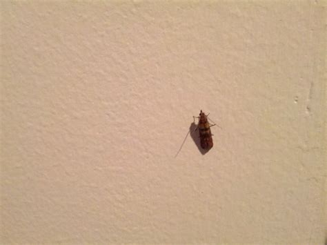 tiny bugs in house 404 not found