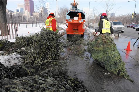 chicagoans can recycle christmas trees at park district