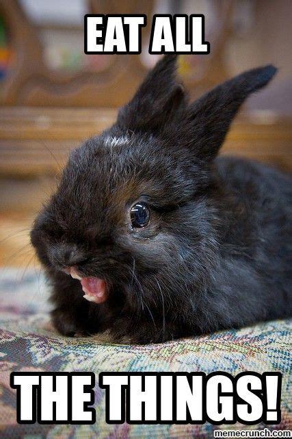 Rabbit Meme - rabbit meme memes