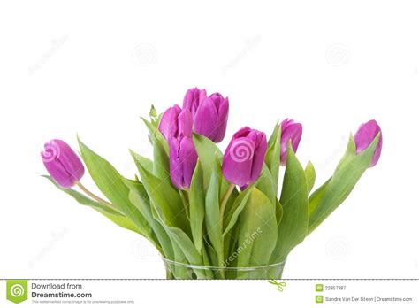 Vase With Tulips by Vase With Purple Tulips Royalty Free Stock Photography