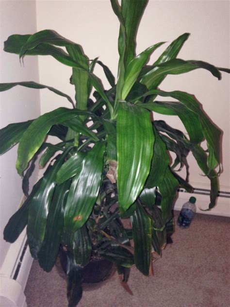 house plant identification house plant identification pictures free image